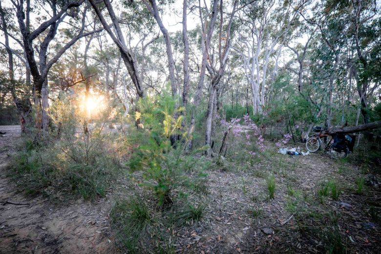 Morning at the ridgetop campsite in Berowra Valley NP above Berowra Heights.